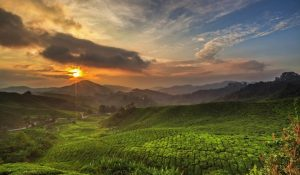 Cameron Highlands Sunrise Tour