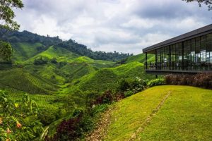Cameron Highlands Tea Plantation Tour