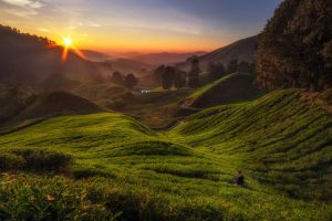 Sunrise At Cameron Highlands